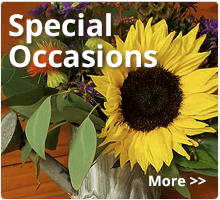 Florist for special occasions in Austin, TX