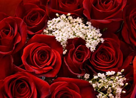 special occasions red roses